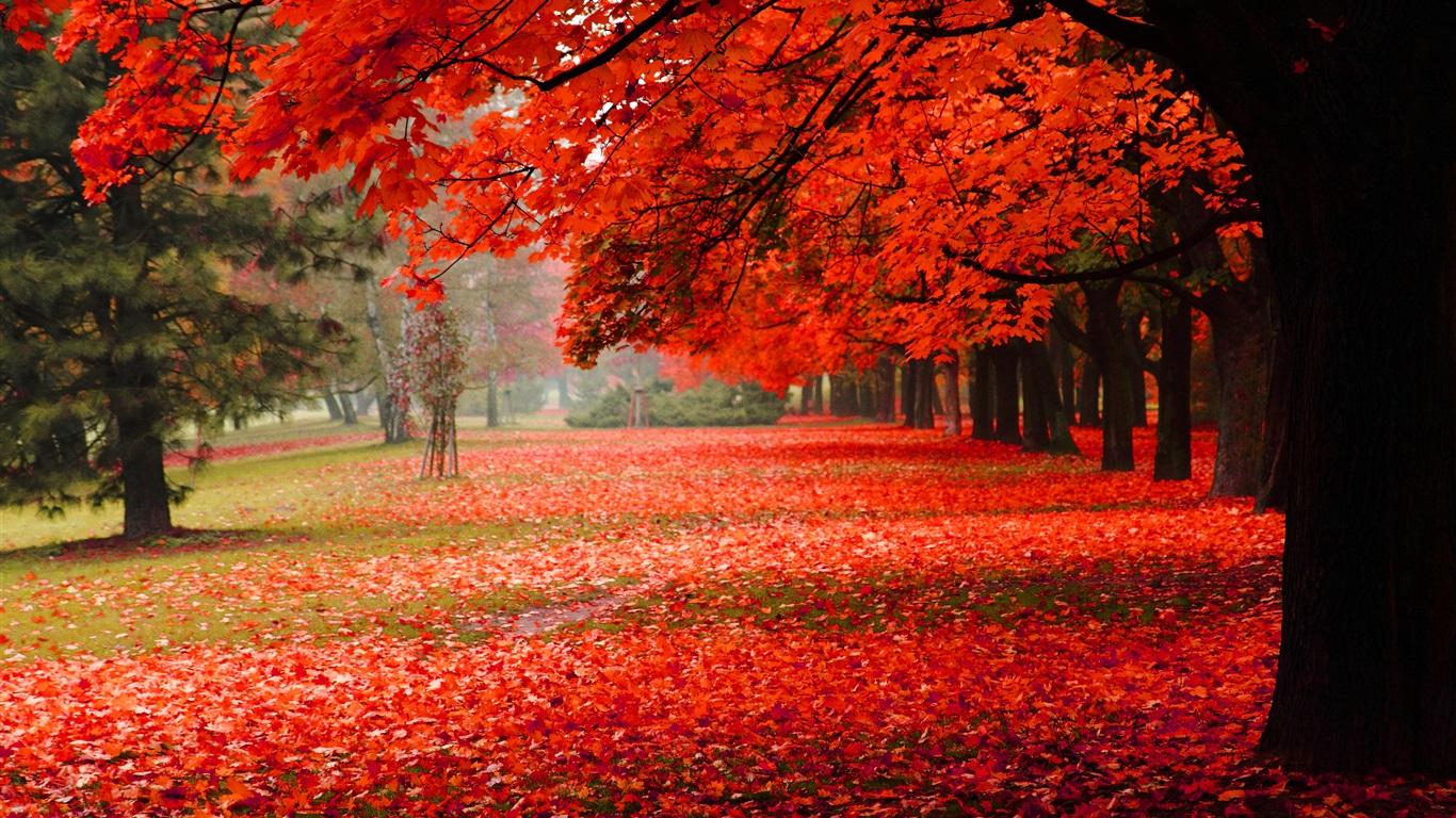 美しい秋 紅葉 デスクトップの壁紙 1366x768 壁紙をダウンロード Ja Hdwall365 Com