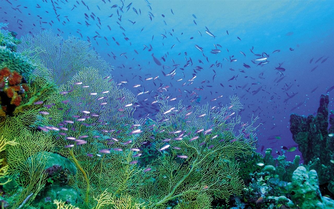 美しい海底 植物や魚 デスクトップの壁紙 1280x800 壁紙をダウンロード Ja Hdwall365 Com