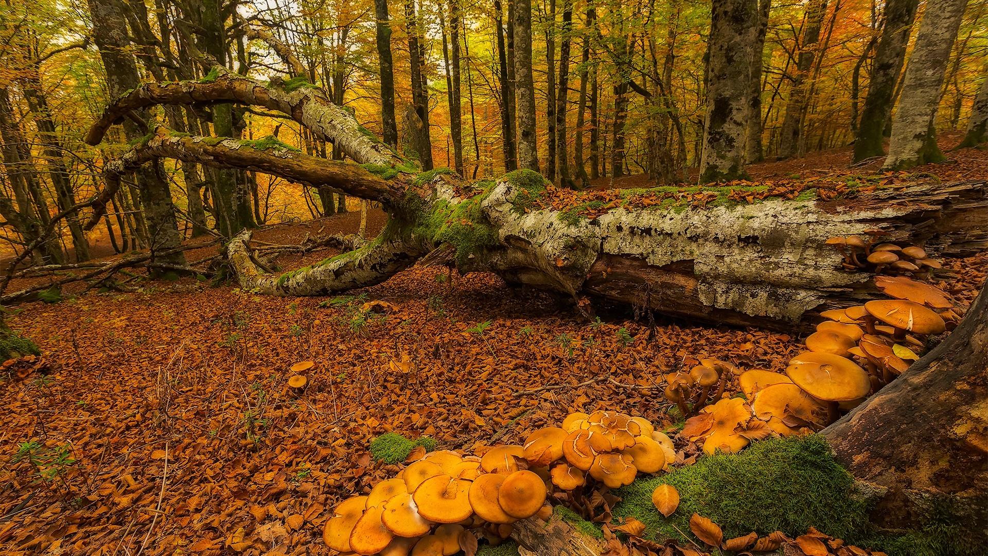 バスク スペイン 森 木 キノコ 秋 デスクトップの壁紙 19x1080 壁紙をダウンロード Ja Hdwall365 Com